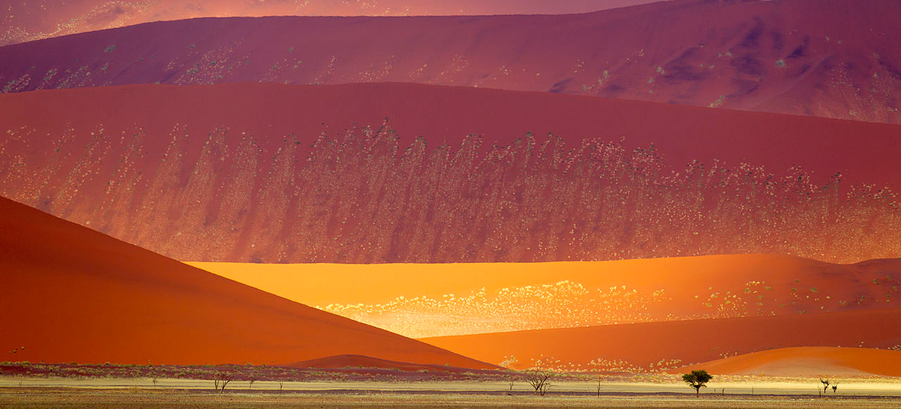 Sand dunes in the Namib-Naukluft National Park, Namibia.