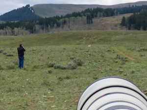 Man trying to take a cellphone picture of a pronghorn